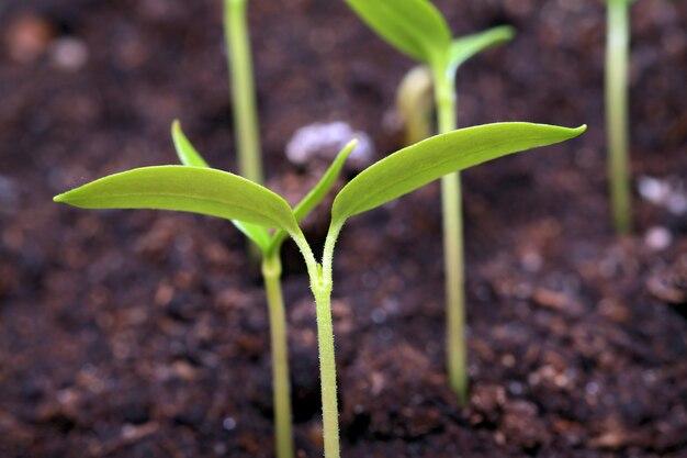 Grüner spross der pflanze auf braunem land
