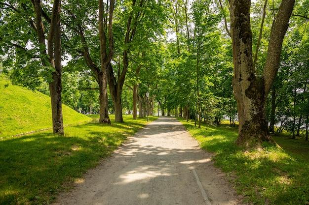 Grüner stadtpark mit bäumen, blumen, gehwegen.