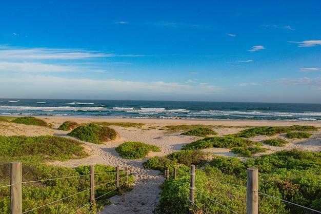Grüner strand unter blauem himmel