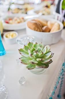 Grüner succulent auf dem tisch im restaurant
