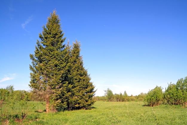 Grüner tannenbaum auf frühlingsfeld