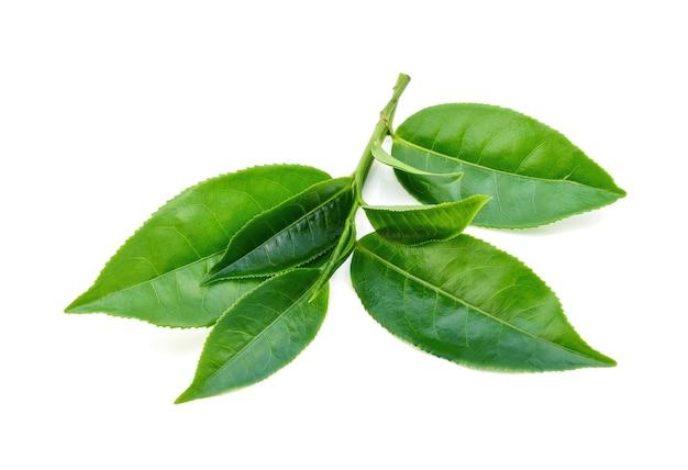 Grüner teeblatt auf weißem hintergrund