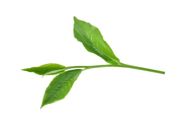 Grüner teeblatt isoliert auf weißem hintergrund