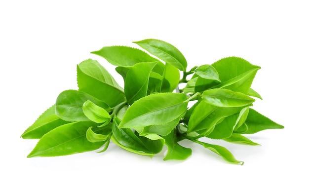 Grüner teeblatt lokalisiert auf weiß