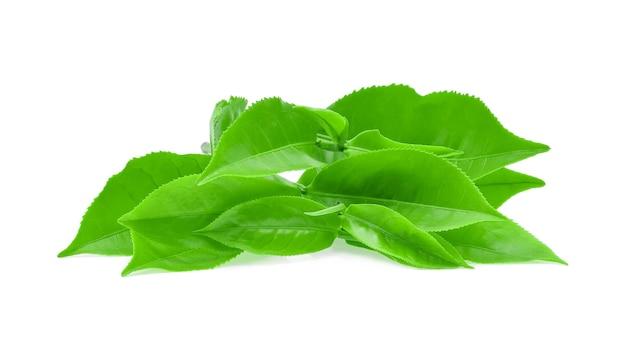 Grüner teeblatt lokalisiert auf weiß.
