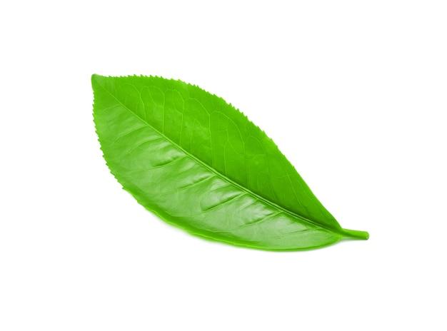 Grüner teeblatt mit auf weißem hintergrund