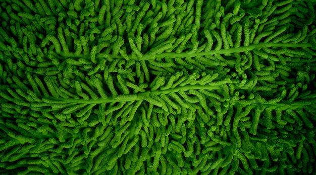 Grüner teppichhintergrund