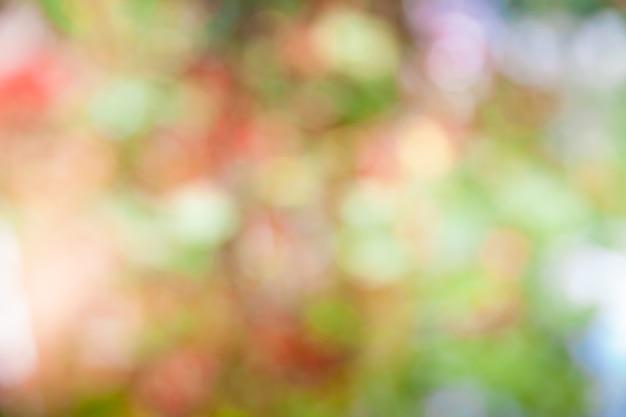 Grüner unscharfer bokehhintergrund und sonnenlicht