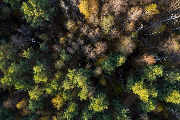 Grüner wald, blick von oben