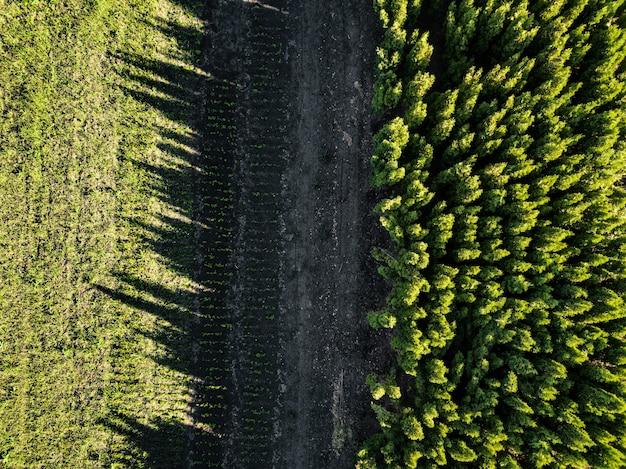 Grüner wald, die reflexion des schattens von den bäumen auf dem feld