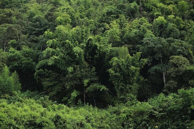 Grüner wald hintergrundtextur