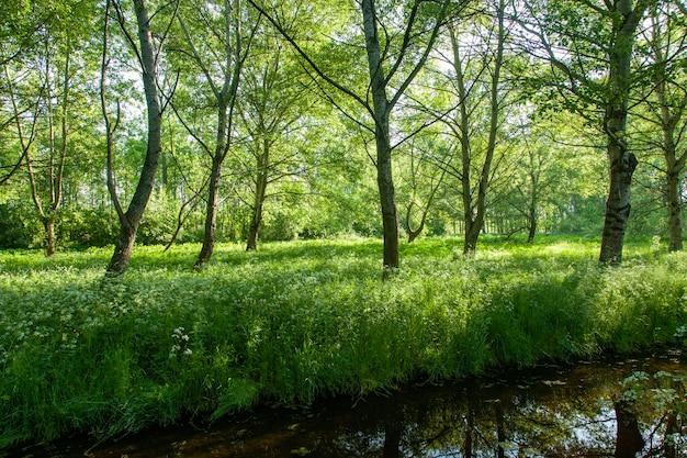 Grüner wald in den niederlanden