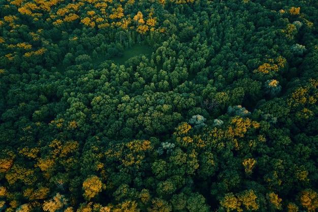 Grüner wald luftbild naturlandschaft vogelperspektive schöner hintergrund des sommerwaldes