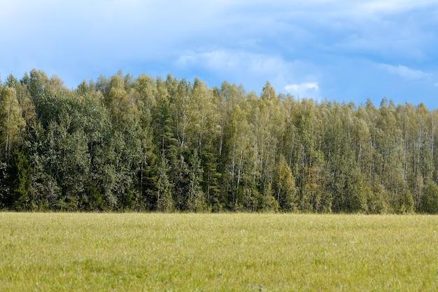 Grüner wald mit gras auf der wiese. sommerwaldlandschaft, weidevieh. schöner gras- und waldhintergrund für design.