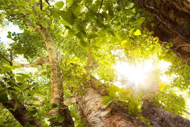 Grüner wald mit sonnenlicht