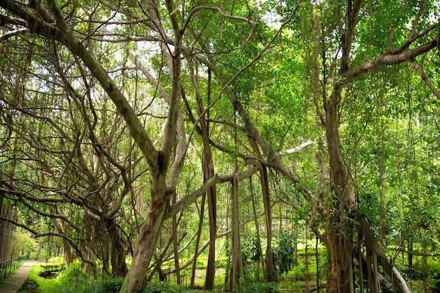 Grüner waldbaumlandschaftshintergrund