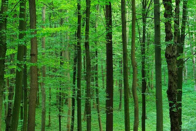 Grüner waldhintergrund am sonnigen tag