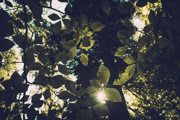 Grüner waldhintergrund an einem sonnigen tag. helle sonne im wald