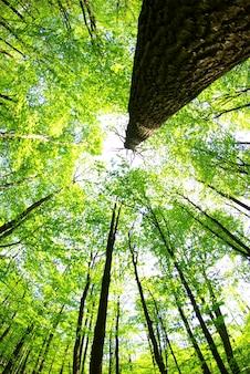 Grüner waldhintergrund an einem sonnigen tag