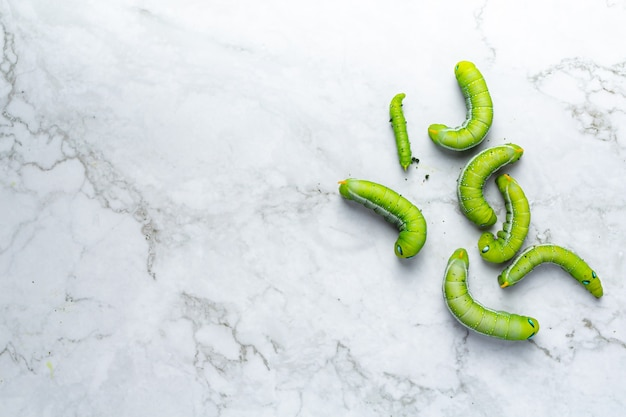 Grüner wurm auf weißem marmorboden