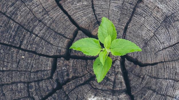 Grünes baumwachstum neues lebensblatt auf faulem holzstumpf