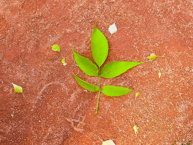 Grünes blatt auf einem orangefarbenen hintergrund. heller großer grüner blattorangenhintergrund. helle blätter auf einem abstrakten hintergrund. kreatives design