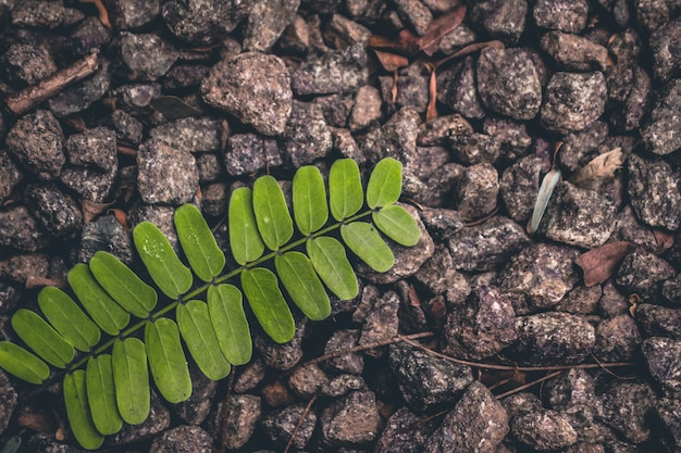 Grünes blatt auf kies liegen