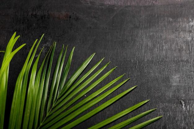 Grünes blatt auf schwarzem hintergrund