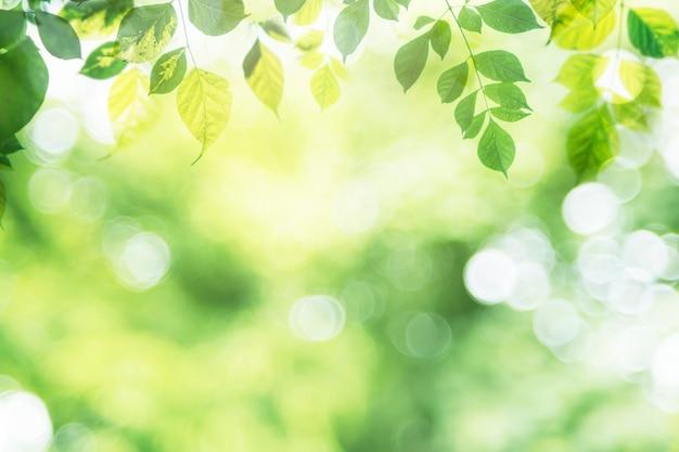 Grünes blatt auf unscharfem grün im garten mit kopienraum.