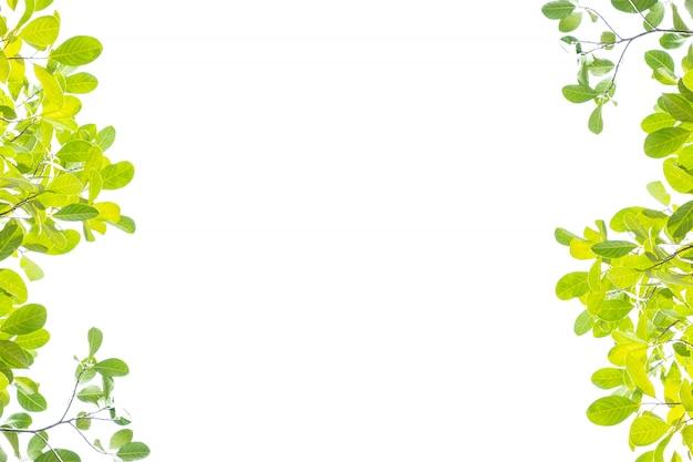 Grünes blatt auf weiß mit kopienraum