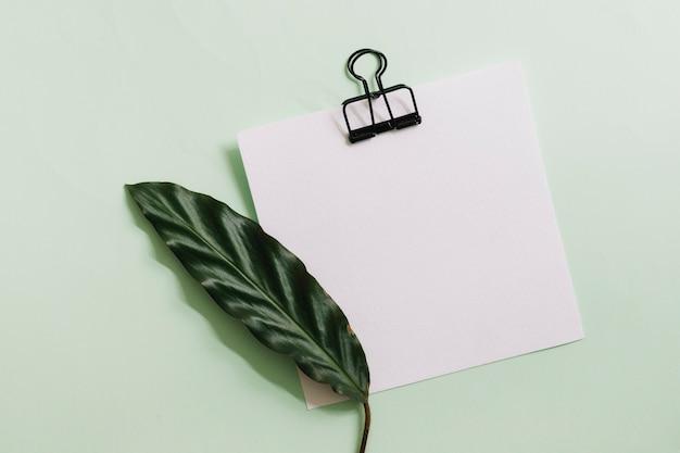 Grünes blatt auf weißbuch mit schwarzer papierklammer gegen pastellhintergrund