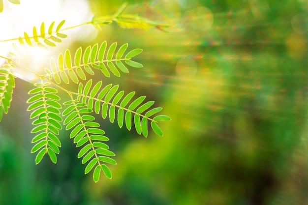 Grünes blatt auf zweig mit sonnenstrahl