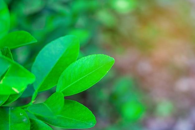 Grünes blatt auf zweig