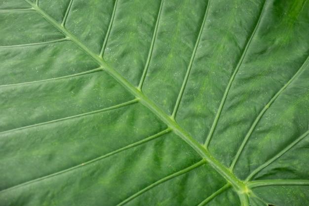 Grünes blatt beschaffenheitshintergrund