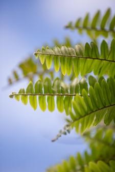 Grünes blatt bokeh mit schönem weichem sonnenlicht