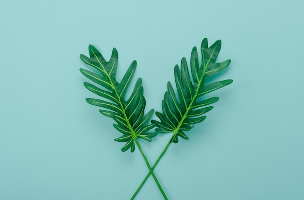 Grünes blatt der flachen lage auf modernem rustikalem hintergrund des blauen papiers.