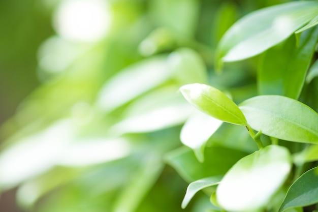 Grünes blatt der nahaufnahme im garten auf unscharfem hintergrund. schön und einfach für das auge.