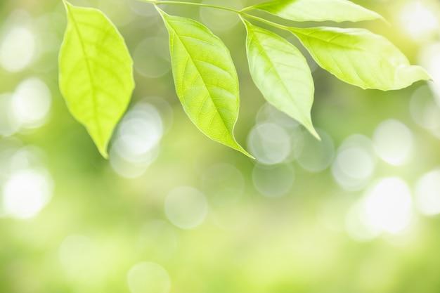 Grünes blatt der natur auf unscharfem grünhintergrund mit bokeh und kopienraum.