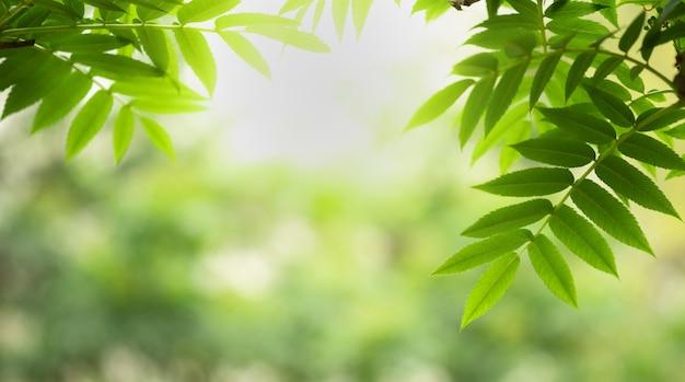 Grünes blatt der natur und sonnenlicht mit dem grün verwischten hintergrund