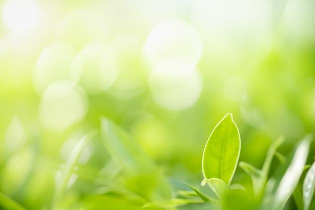 Grünes blatt der naturansicht auf unscharfem grünhintergrund unter sonnenlicht mit bokeh und kopienraum.