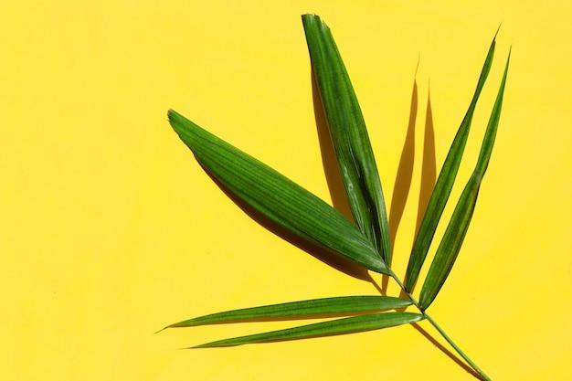 Grünes blatt der palme auf gelbem hintergrund.
