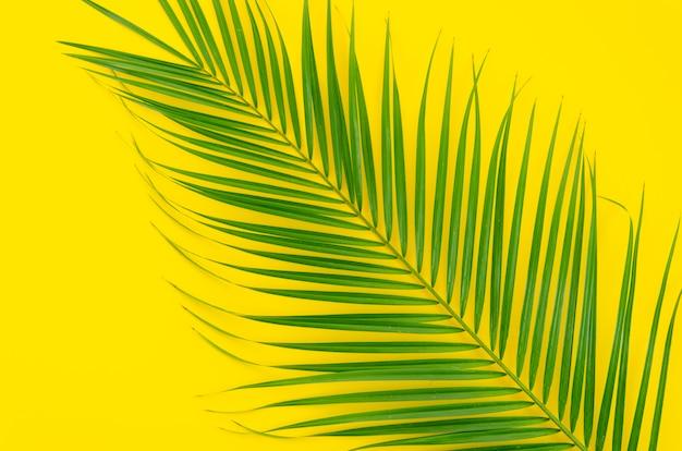 Grünes blatt der palme auf gelbem hintergrund