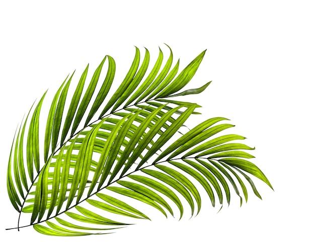 Grünes blatt der palme auf weißer oberfläche