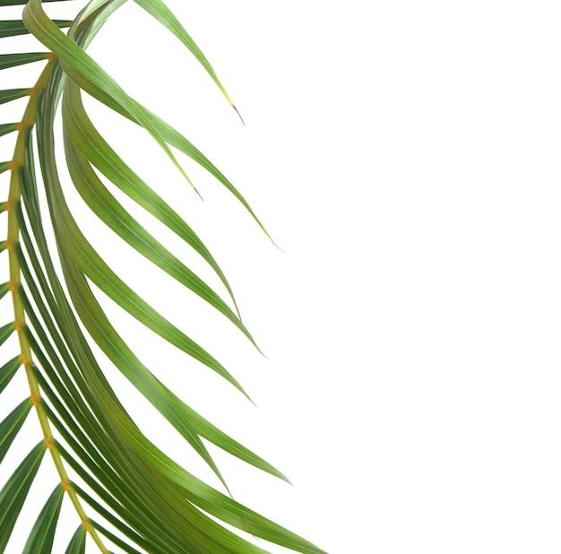 Grünes blatt der palme