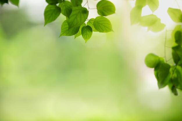 Grünes blatt der schönen naturansicht auf unscharfem grün unter sonnenlicht mit bokeh- und kopierraumnaturpflanzenlandschaft, ökologietapetenkonzept.