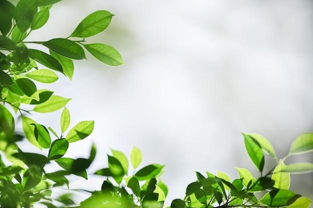 Grünes blatt der schönen naturansicht auf unscharfem grünhintergrund unter sonnenlicht mit bokeh und kopienraum.