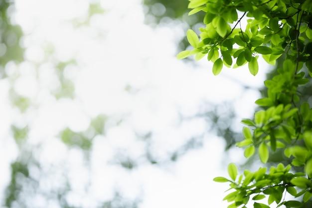 Grünes blatt der schönen naturansicht auf unscharfem grünhintergrund unter sonnenlicht.