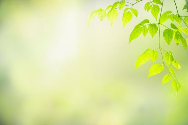 Grünes blatt der schönen naturansicht auf unscharfem grünhintergrund.