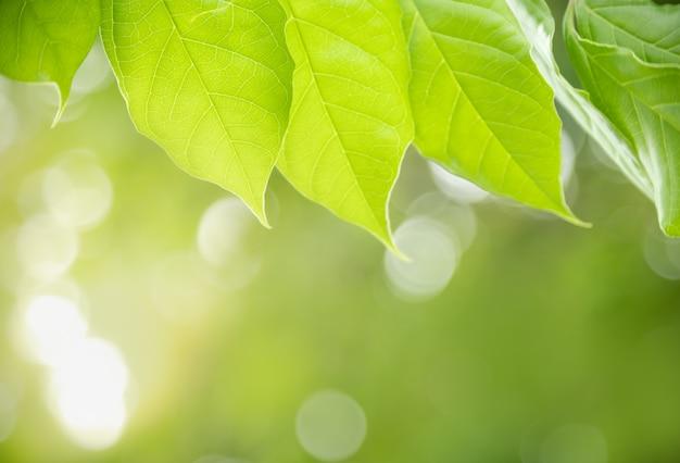 Grünes blatt der schönen naturansicht auf verschwommenem grün unter sonnenlicht mit bokeh und kopierraum unter verwendung als natürliches pflanzenlandschafts-, ökologietapetenkonzept.