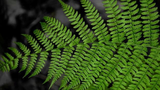 Grünes blatt des waldfarns